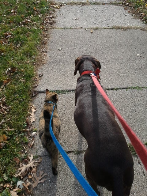 Louie and Dannie do not always walk together so evenly. (Photo by Vickie Elmer)